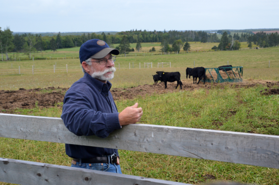 """P.E.I. ALUS participants Mike and Evelyn Lafortune run Dexter Cattle Company in North Milton, Prince Edward Island. Since 2017, they have established hundreds of metres of cattle-proof, wildlife-friendly fencing with alternative watering systems, and they now participate in the delayed-hay-cut initiative. """"We look at everything with a holistic approach: what is this doing to biodiversity, what is it doing to water, what is it doing to the children who play on this land? Helping the bobolink fits in with that,"""" said Mike."""